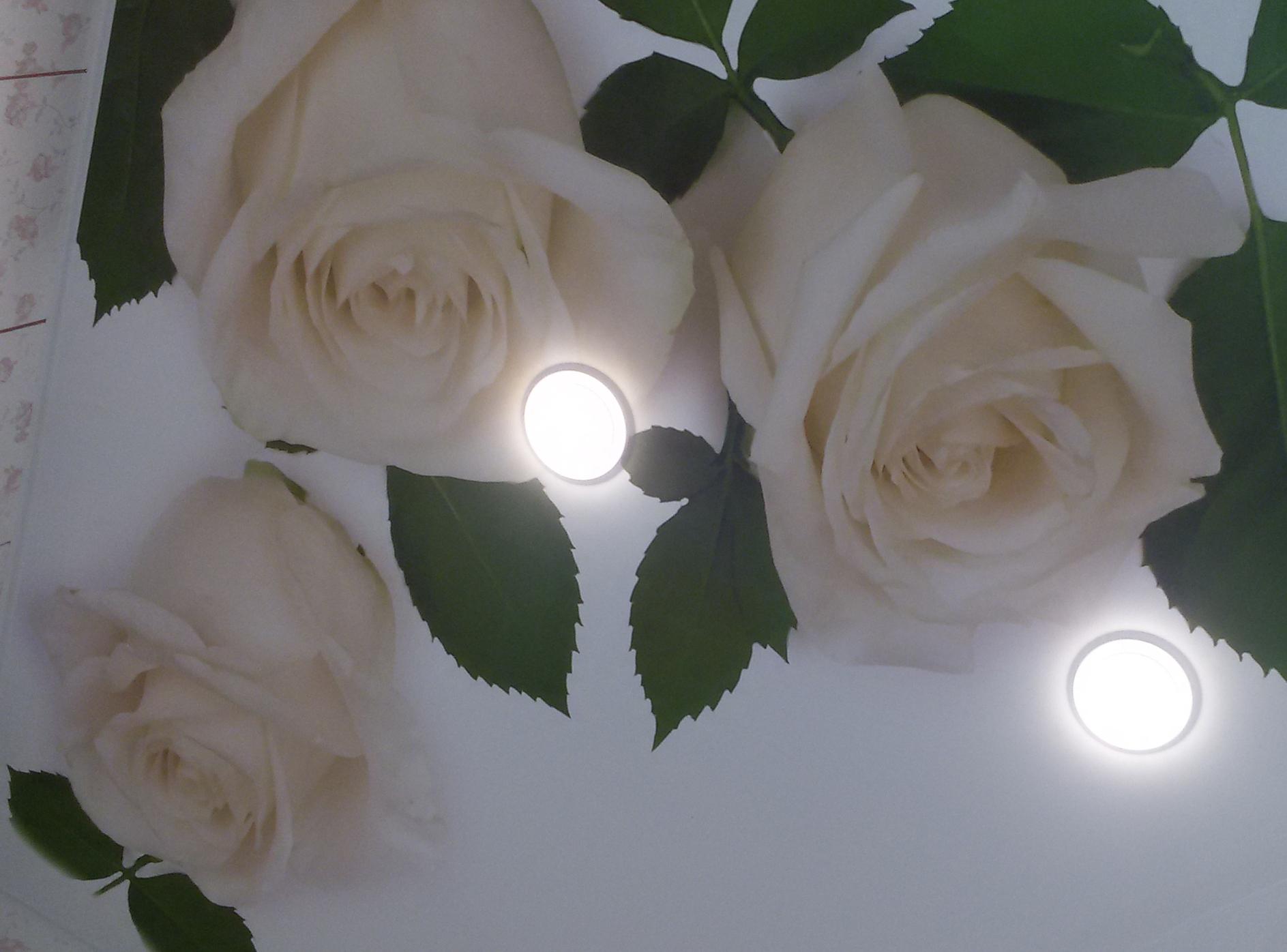 Фотопечать роз на натяжных потолках